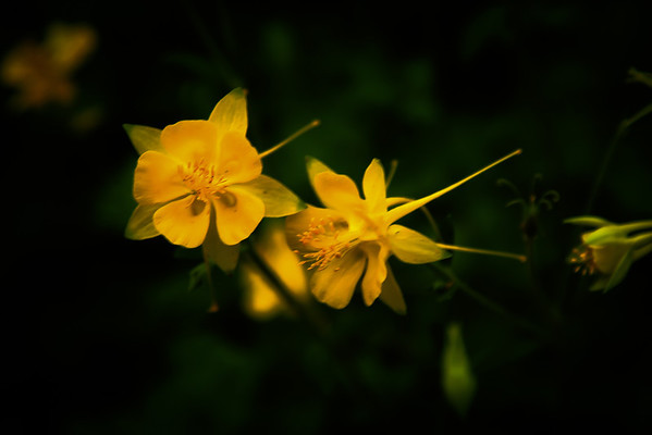 Yellow, Zilker Botanical Gardens