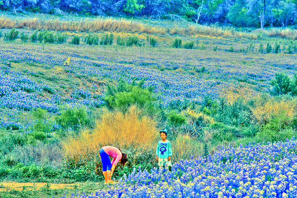 Bluebonnets at Muleshoe Bend #25